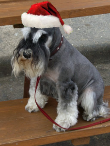 Pet Health and the Holidays  www.Nutri-Dog.com